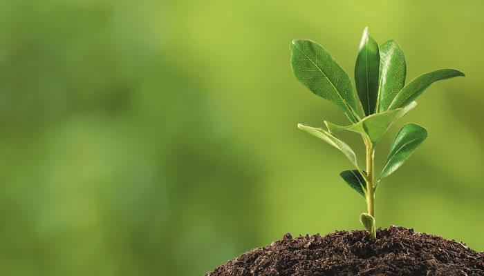 397860-plant